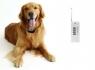 ЕЛЕКТРОНЕН НАШИЙНИК ЗА ДРЕСУРА НА КУЧЕ (кучешки пейджър) ** 58 лв.