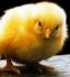 Предлагаме инкубатори за люпене на яйца на изгодни цени!
