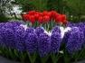 Поддръжка на градини и почистване на запустели парцели