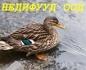 """""""Недифууд"""" ООД"""