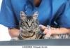 Денонощен спешен ветеринарен център
