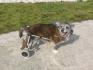 Колички за инвалидни кучета