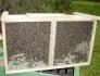 пакетни пчели