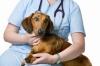 Денонощна и спешна ветеринарна помощ.
