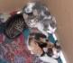 Спешно подаряваме много красиви котенца!