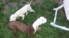 Кучета за трюфели