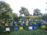 Продаваме чист балкански манов мед