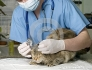 Денонощен и спешен ветеринарен център