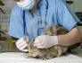 Денонощен и спешен ветеринарномедицински център