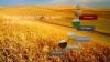 Купувам обл. Видин в общините Брегово, Ново Село, Видин, Бойница, Кула, Грамада, Димово, Ружинци и...